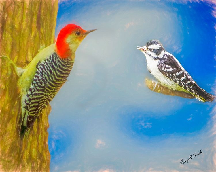 Soft Art portrait of Red Bellied woodpecker and a young downy woodpecker.