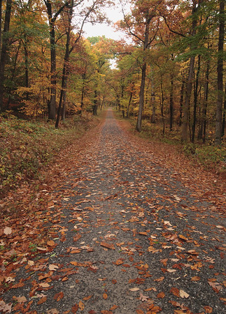 A Vertical Stock Photograph of a gravel road running through an autumn hardwood forest in central Pennsylvania