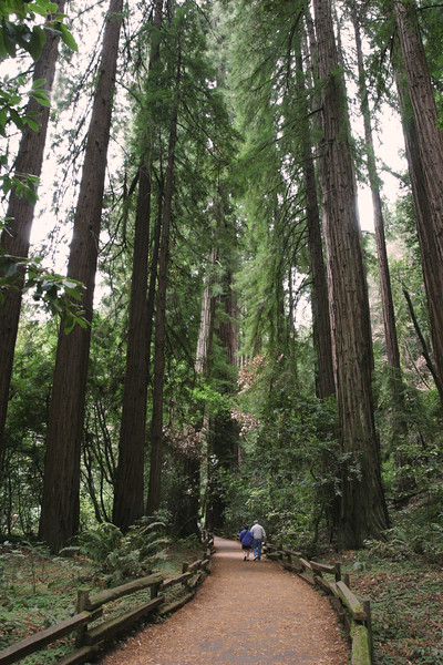 A vertical stock photograph of an elderly man and his adult daughter walking along a trail in Muir woods National Park California.