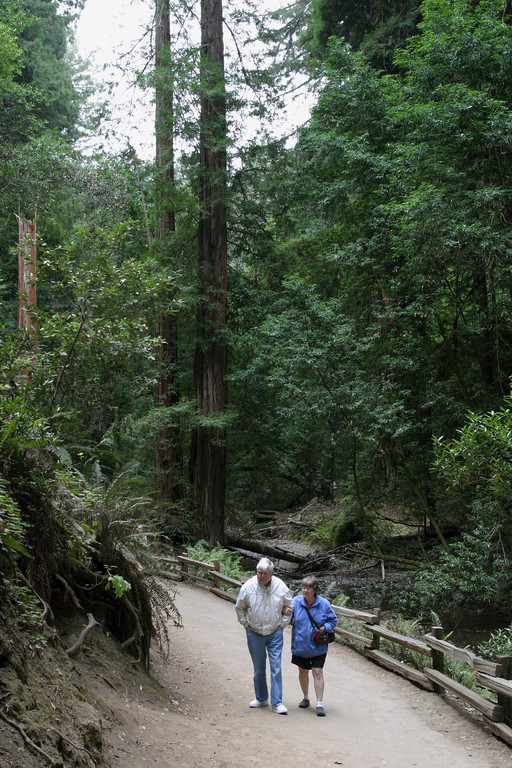 A vertical stock photo of an Elderly Father and his Daughter walking the path in Muir Woods National Park California.