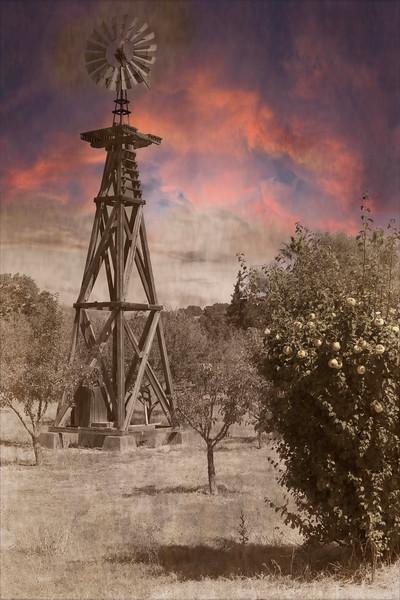 John Muir homestead,San Francisco Bay Area, in Martinez, Contra Costa County, California. .
