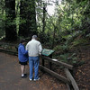 A horizontal stock photo of an Elderly Father and his Daughter Reading a Sign in Muir Woods National park California.