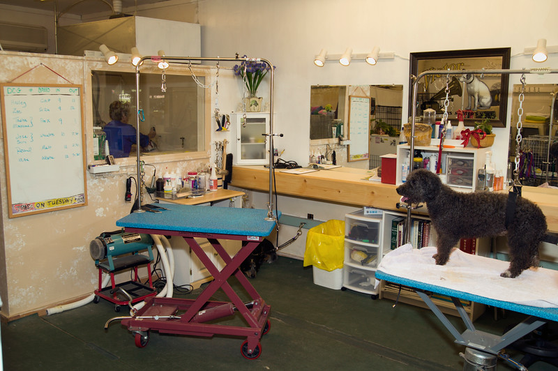 Canine grooming shop in operation