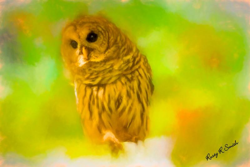 Soft art Barred Owl.
