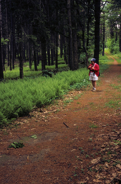 A woman is walking on a path through a lush pine forest on a beautiful sunny day.