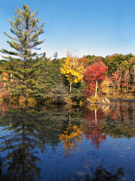 A vertical stock photo of a Fall reflection on the pond in Gay City State park,Hebron Connecticut.