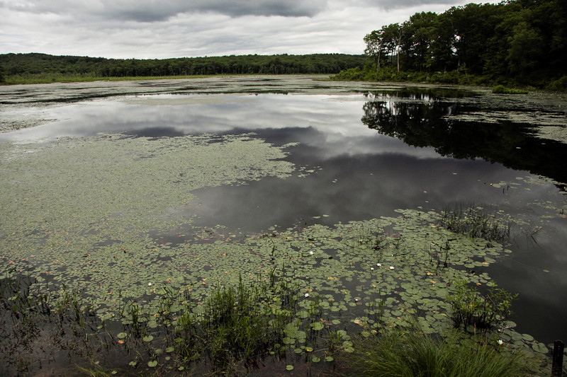 A horizontal stock photograph of  the beaver pond in Natchug State Forest located in Eastern Connecticut.