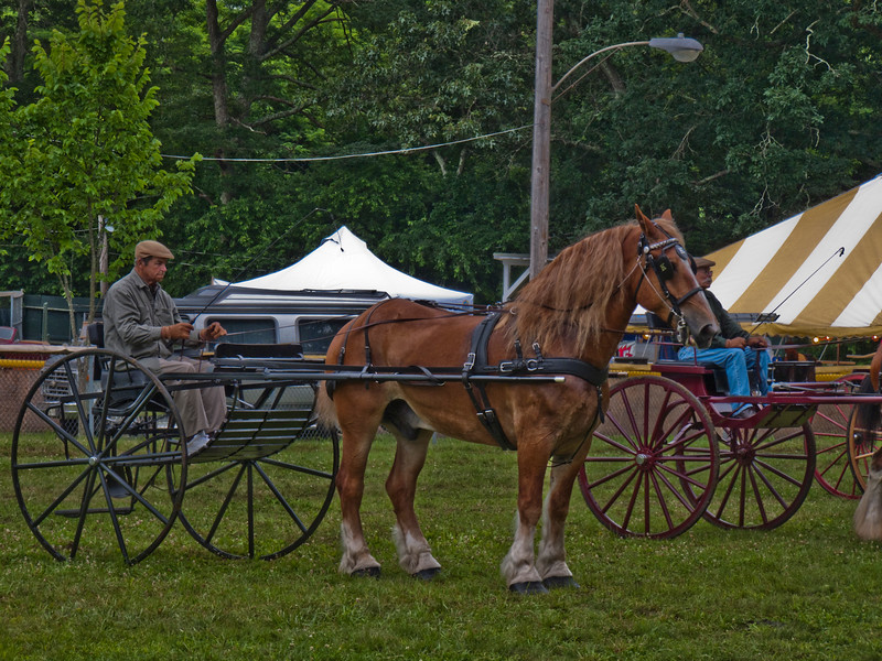 A horizontal stock photograph of a man sitting in a two wheeled buggy, hitched to a Belgian draft horse.