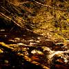 A horizontal stock photograph of a stream running under a pine branch.