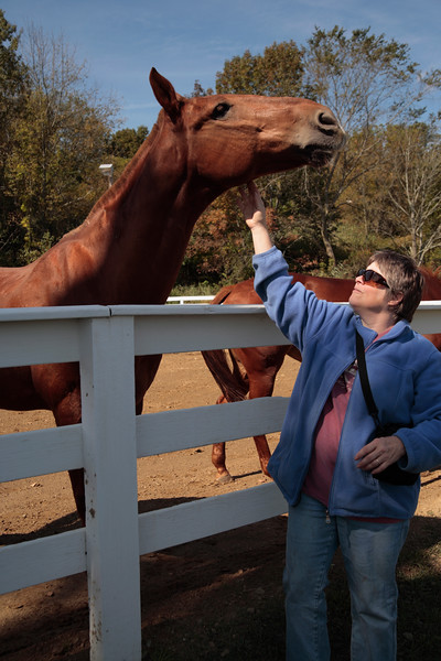 A Vertical Stock Photograph of a woman scratching the jaw of a brown horse.
