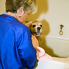 Working grooming salon showing a female groomer bather with one small dog  in the tub.