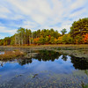 Autumn colors at a small marsh in Pachaug State Forest,Eastern Connecticut