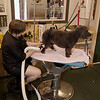 Working grooming salon showing a female groomer working on a very old dog with safety straps installed. Canine Design Grooming Salon Pawcatuck Connecticut