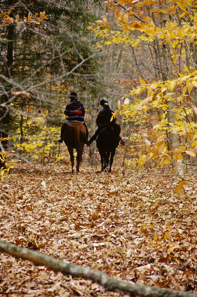 A vertical stock photograph of  two young women riding their horses on a leaf covered trail in Eastern Connecticut.