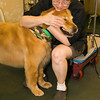A vertical stock photograph of Mac the happy golden retriever bonding with Linda,his groomer. At Canine  Design Pawcatuck Ct.