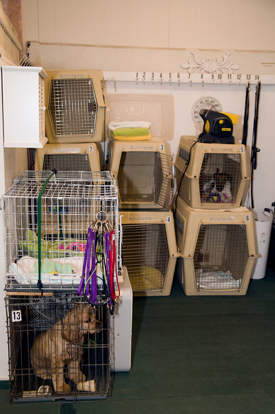 Grooming shop holding area showing two dogs waiting to be groomed