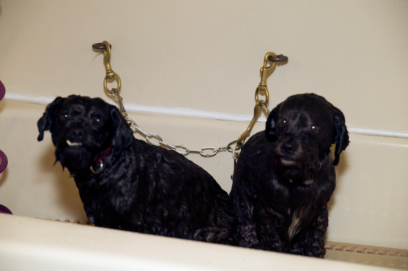 Two dogs waiting for bath at Canine Design Grooming Salon. Pawcatuck Connecticut