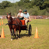 A horizontal Stock Photograph of a woman driving her morgan horse drawn buggy through a cone course.A navigator is pointing out the next cone for her.