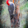 A vertical stock photograph of a Red Bellied Woodpecker clinging to feeder log
