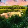 A New England Bog.