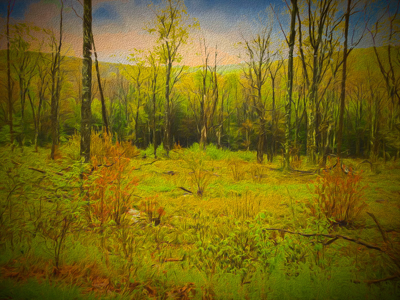 A landscape that is recovering from fire at one time. Vibrant ve