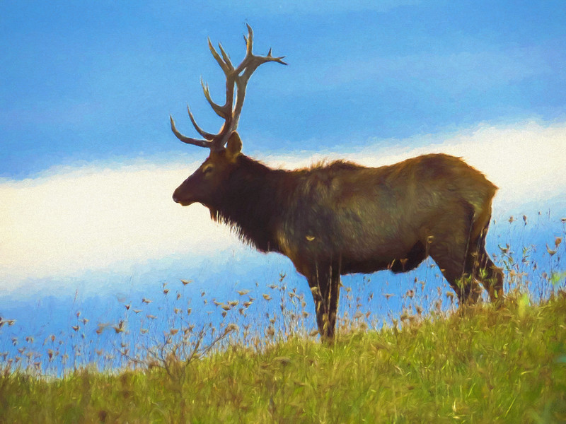 An artistic view of a large Pennsylvania bull Elk standing alone on a hill top