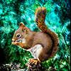 Female Red Squirrel