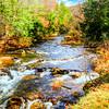 Wild trout stream