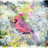 Male cardinal Art