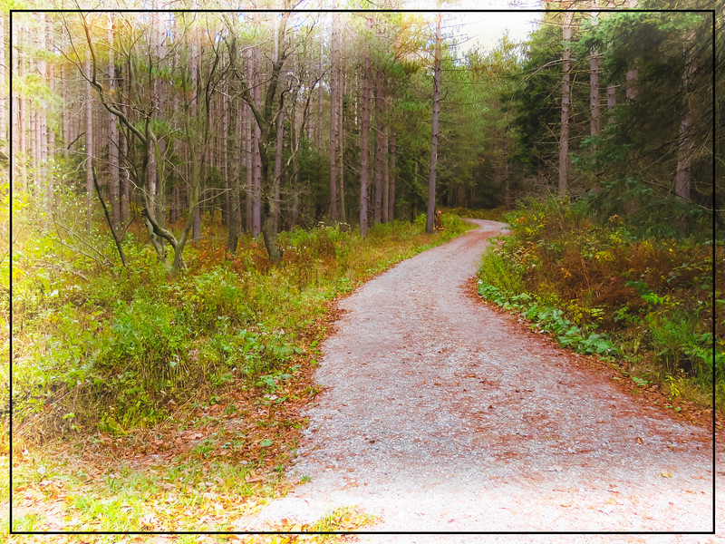 digital art photograph of a dirt road winding through a pine fo