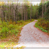 digital art photograph of a dirt road winding through a pine fo
