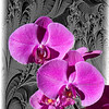 Art photograph of two purple orchids.