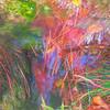 Nature still life