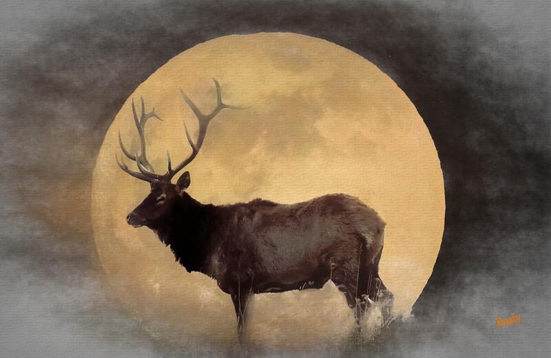 Pennsylvania Bull elk and a full moon.