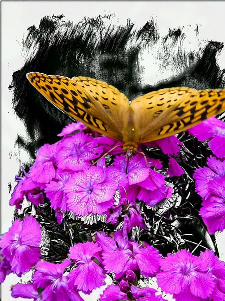 orange butterfly,purple flower