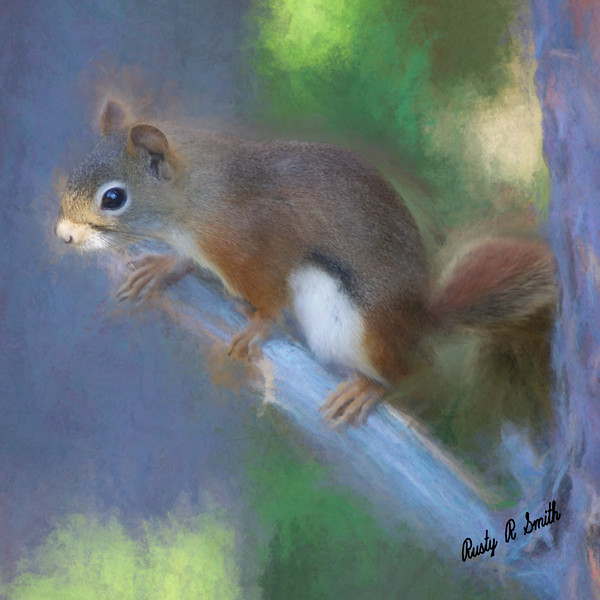 Red Squirrel portrait.