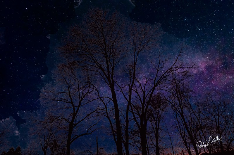A fantasy photograph of tall trees against star studded sky.