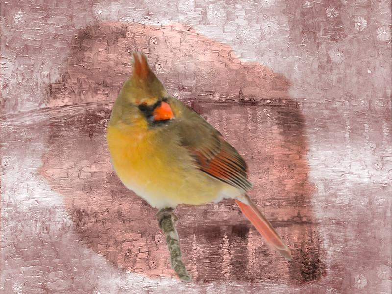 A digital art photograph of a female cardinal perching on a branch.