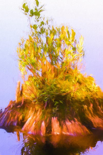 A natural still life of vegetation on an old stump in the water