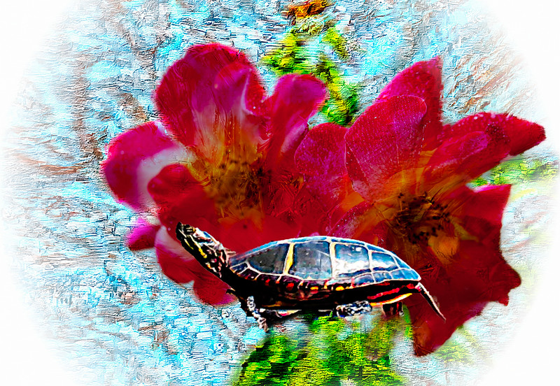 Two Beautiful red flowers and turtle.