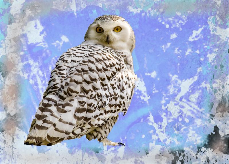 Art Portrait of Snowy White Owl