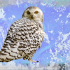 Art Portrait of Snowy White Owl