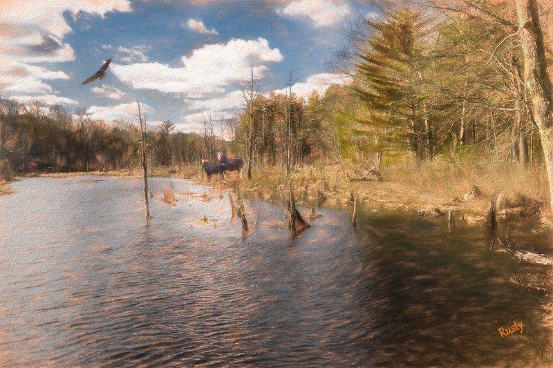 Nature composite photograph.