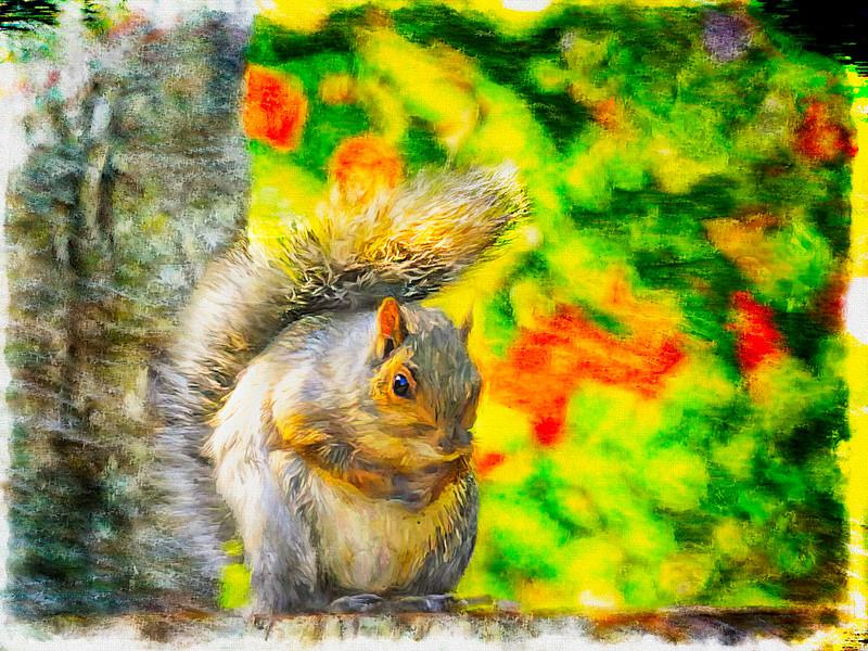 Alert Gray Squirrel sitting on a stump.