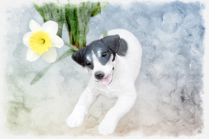 Canine and flower.