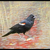 Red Winged Black bird perching