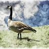 Guardian of his flock