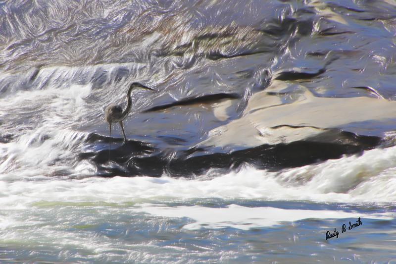 Blue Heron in flowing water.