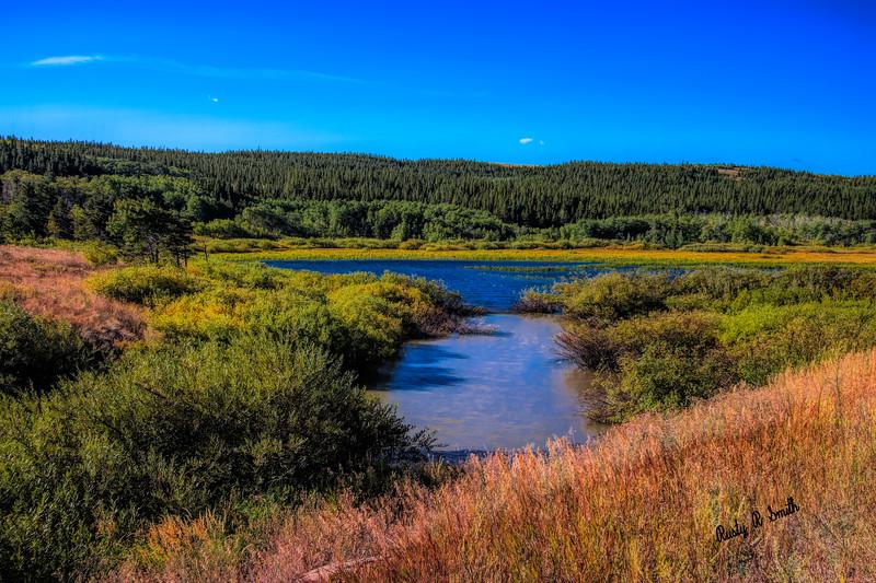 A fresh water marsh.