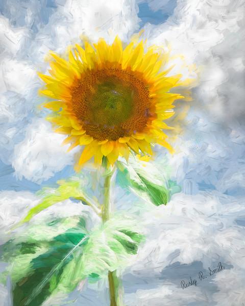 Art photograph of a single sunflower.